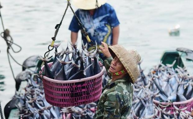 组图 | 海南万宁乌场渔港恢复往日喧闹